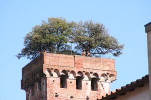 torre-del-árbol