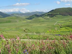 Castelluccio-di-Norcia1