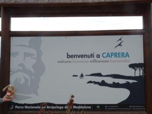 guauguau-isola-di-caprera--cerdeña